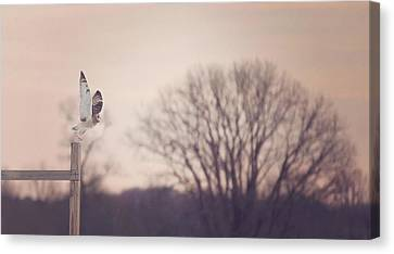 Short Eared Owl At Dusk Canvas Print by Carrie Ann Grippo-Pike