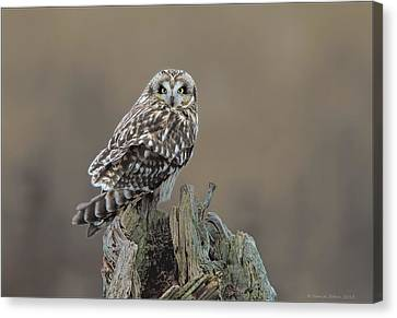 Canvas Print featuring the photograph Short Eared Owl by Daniel Behm
