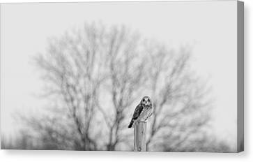 Short-eared Owl In Black And White Canvas Print