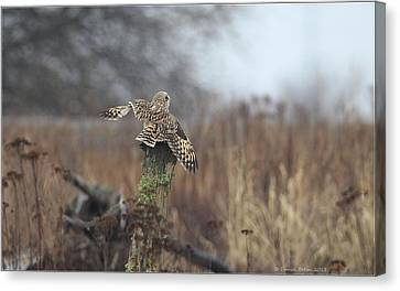 Canvas Print featuring the photograph Short Eared Owl In Habitat by Daniel Behm