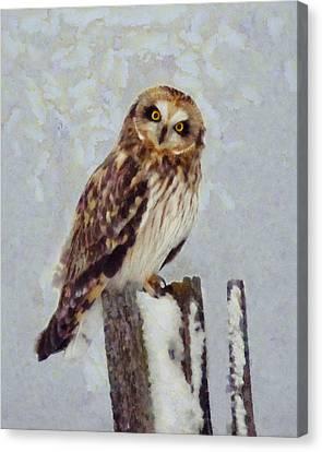 Short-eared Owl   Canvas Print by Mark Kiver