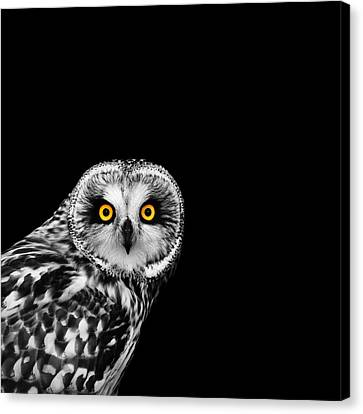 White Birds Canvas Print - Short-eared Owl by Mark Rogan