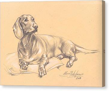 Short-haired Dachshund On A Pillow Canvas Print