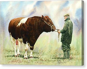 Shorthorn Bull Canvas Print by Anthony Forster