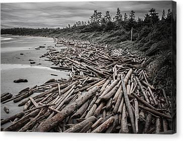 Shoved Ashore Driftwood  Canvas Print