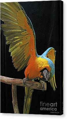 Show Off Canvas Print by Dodie Ulery