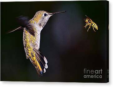 Canvas Print featuring the photograph Showdown by Jack Moskovita