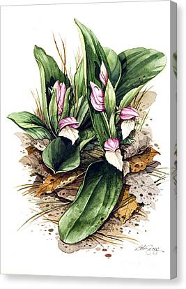 Canvas Print featuring the painting Showy Orchis by Bob  George