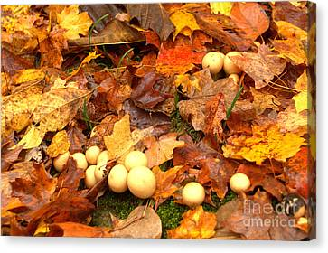 Canvas Print featuring the photograph Shrooms by Jim McCain