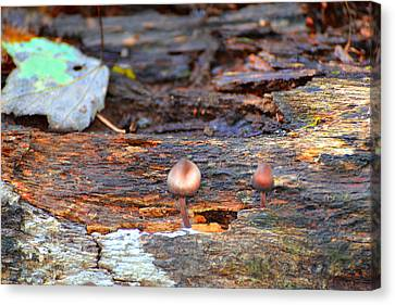Shrooms Canvas Print by Marilyn Holkham