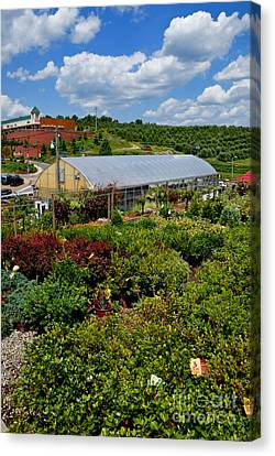 Shrubbery At A Greenhouse Canvas Print by Amy Cicconi