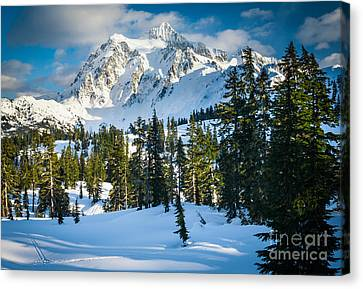Shuksan Winter Paradise Canvas Print by Inge Johnsson