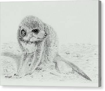 Meerkat Canvas Print - Shy Baby by Wendy Brunell