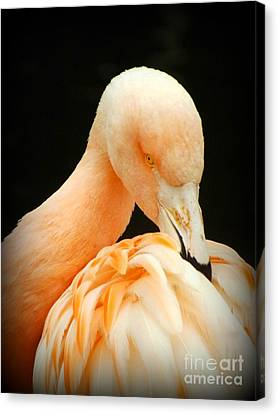 Canvas Print featuring the photograph Shy by Clare Bevan