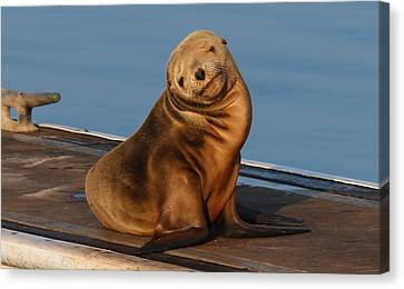 Canvas Print featuring the photograph Shy Sea Lion Pup  by Christy Pooschke