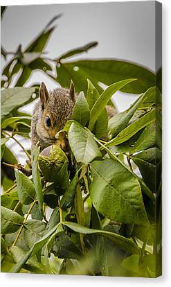 Shy Squirrel Canvas Print by Bradley Clay