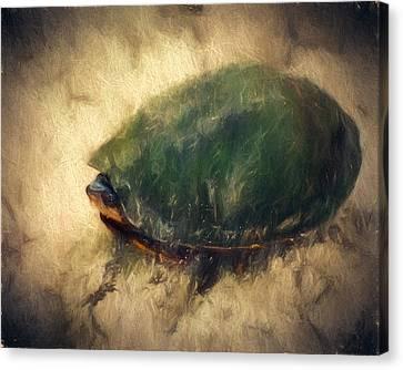 Turtle Shell Canvas Print - Shy Turtle by John K Woodruff
