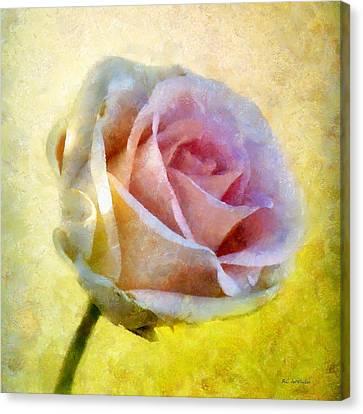 Shy Underneath Canvas Print by RC deWinter