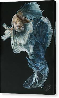 Siamese Fighting Fish Three Canvas Print