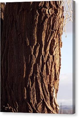 Canvas Print featuring the photograph Siberian Elm Tree by Deborah Moen