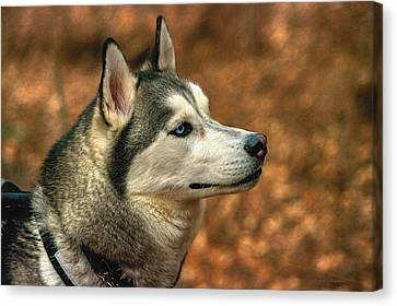 Canvas Print featuring the photograph Siberian Husky by Dennis Baswell