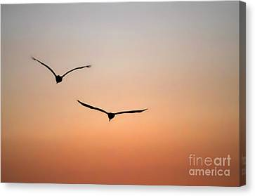 Side By Side Canvas Print by Dan Holm