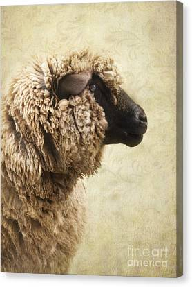 Side Face Of A Sheep Canvas Print by Priska Wettstein