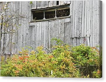 Maine Barns Canvas Print - Side Of Barn In Fall by Keith Webber Jr