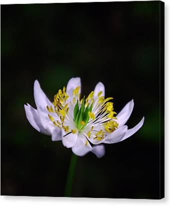 Side View Of A Tiny Paradise Canvas Print by Jeff Swan