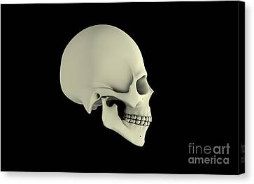 Side View Of Human Skull Canvas Print by Stocktrek Images
