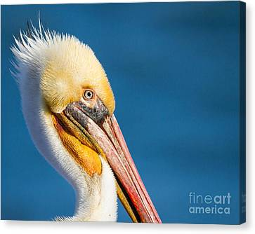 Canvas Print featuring the photograph Sideview by Dale Nelson