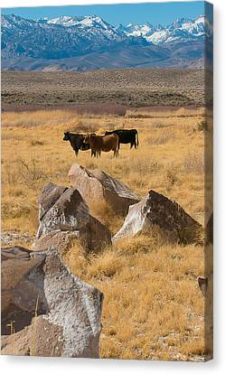 Sierra Cattle Canvas Print by Jan Davies