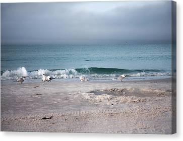 Siesta Key Canvas Print - Siesta Key Morning Gulls by Betsy Knapp