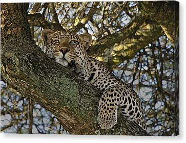 Siesta Time Canvas Print by Gary Hall