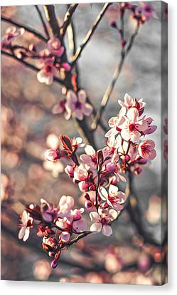 Canvas Print featuring the photograph Signs Of Spring by Joshua Minso