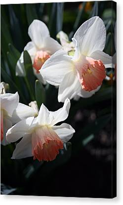 Canvas Print featuring the photograph Signs Of Spring by Kay Novy