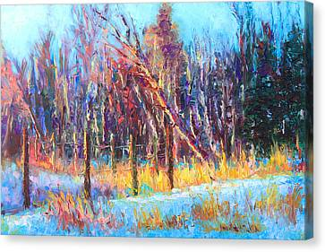 Signs Of Spring - Trees And Snow Kissed By Spring Light Canvas Print by Talya Johnson