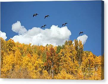 Signs Of The Season Canvas Print by Bob Hislop