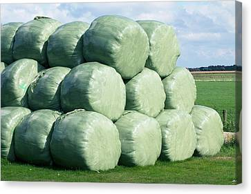 Silage Bales Canvas Print by Dirk Wiersma