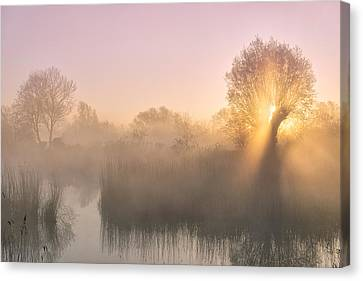 Wetland Canvas Print - Silence by Ellen Borggreve