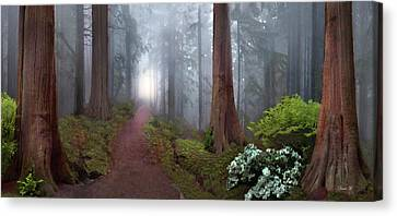 Silence Of The Forest Canvas Print by David M ( Maclean )