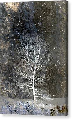 Silent Night Canvas Print by Carol Leigh