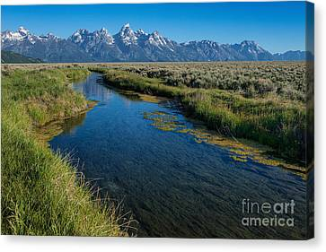 Silent Pathway To The Grand Tetons Canvas Print by Sandra Bronstein