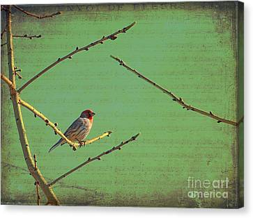 Silent Song Canvas Print