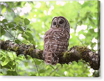 Silent Watcher Of The Woods Canvas Print