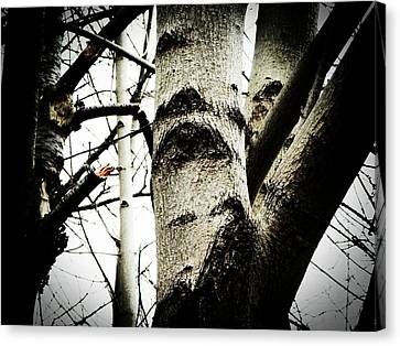Canvas Print featuring the photograph Silent Witness by Zinvolle Art