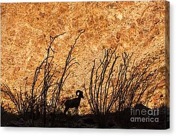 Silhouette Bighorn Sheep Canvas Print