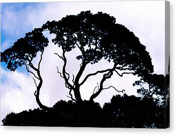 Canvas Print featuring the photograph Silhouette by Jim Thompson