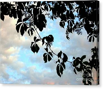 Silhouette Canvas Print by Kathy Bassett