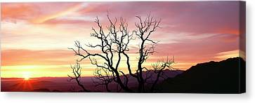 Silhouette Of A Bare Tree At Sunrise Canvas Print by Panoramic Images